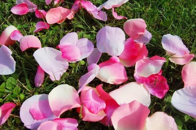 花びら(ピンク)